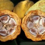 Cacao-pod-k4636-14